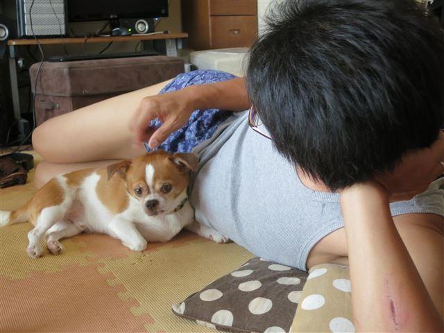 f:id:yasukazu01:20130825195605j:image