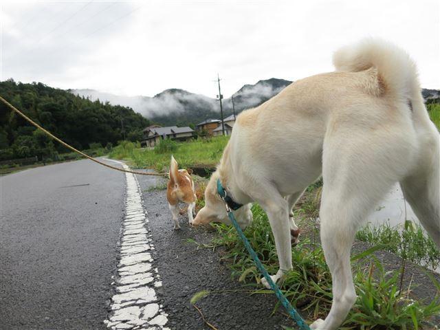 f:id:yasukazu01:20130830200656j:image