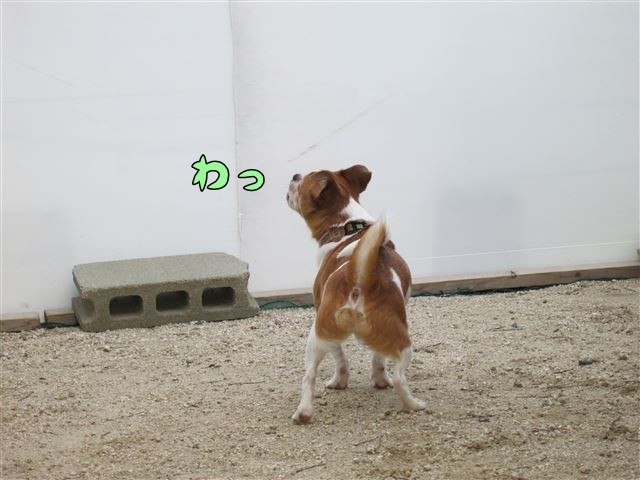 f:id:yasukazu01:20130901220637j:image