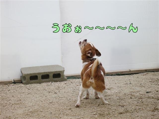 f:id:yasukazu01:20130901220731j:image
