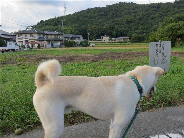 f:id:yasukazu01:20130906200328j:image