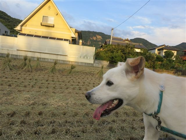 f:id:yasukazu01:20130906201350j:image
