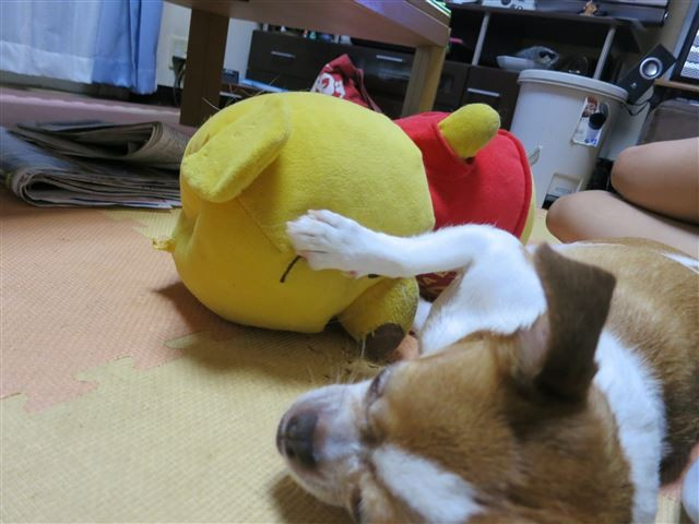 f:id:yasukazu01:20130912222906j:image