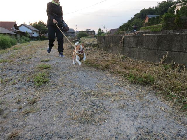 f:id:yasukazu01:20130913222349j:image