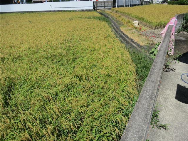 f:id:yasukazu01:20130923222610j:image