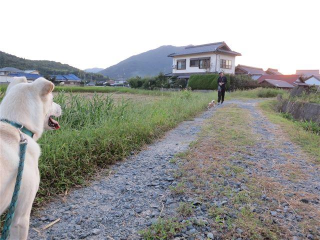 f:id:yasukazu01:20130925105845j:image