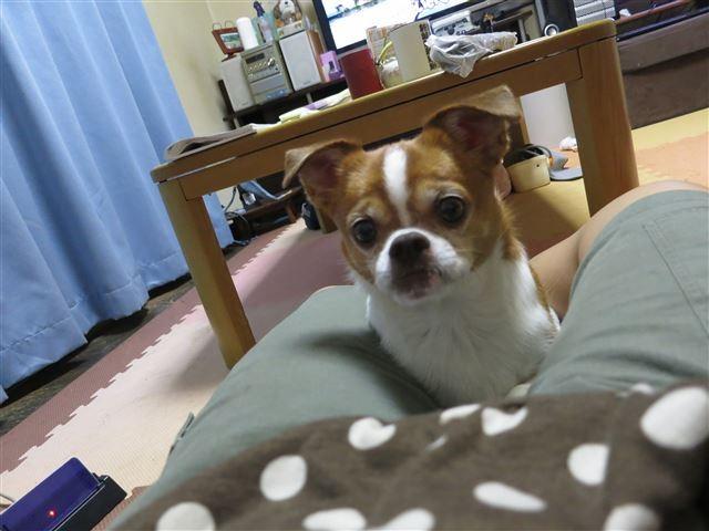 f:id:yasukazu01:20130929222006j:image