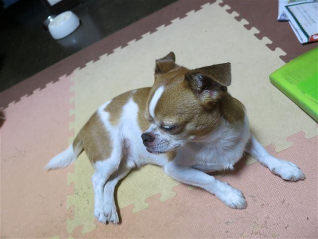 f:id:yasukazu01:20130930223109j:image