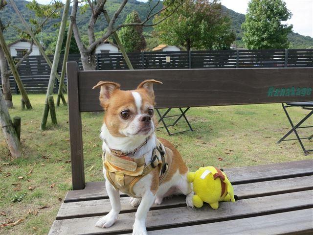 f:id:yasukazu01:20131003202949j:image