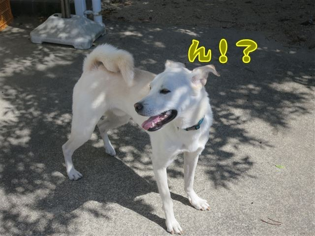 f:id:yasukazu01:20131004221406j:image