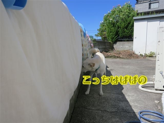 f:id:yasukazu01:20131004221828j:image