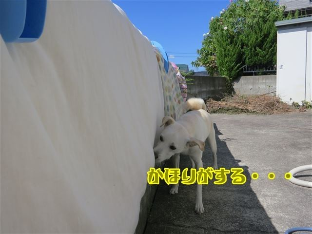 f:id:yasukazu01:20131004222105j:image