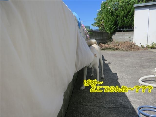 f:id:yasukazu01:20131004222609j:image