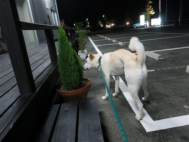 f:id:yasukazu01:20131007214119j:image