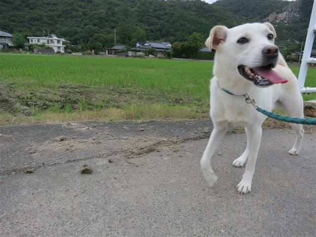 f:id:yasukazu01:20131008143646j:image