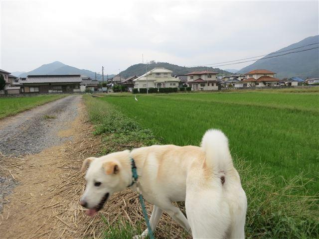 f:id:yasukazu01:20131010210647j:image