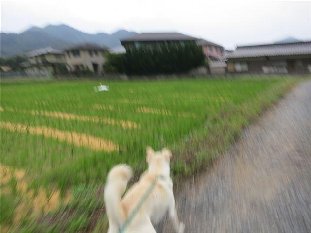 f:id:yasukazu01:20131010210822j:image