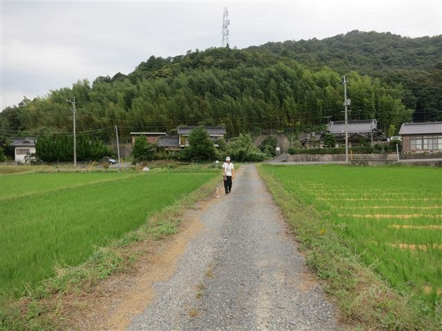 f:id:yasukazu01:20131010211108j:image