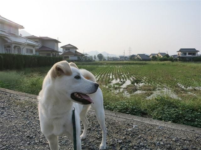 f:id:yasukazu01:20131011202628j:image