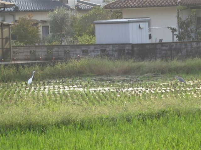 f:id:yasukazu01:20131011202722j:image