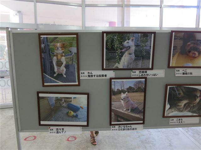 f:id:yasukazu01:20131012195849j:image