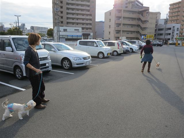 f:id:yasukazu01:20131020203146j:image