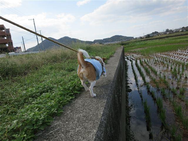 f:id:yasukazu01:20131026195137j:image