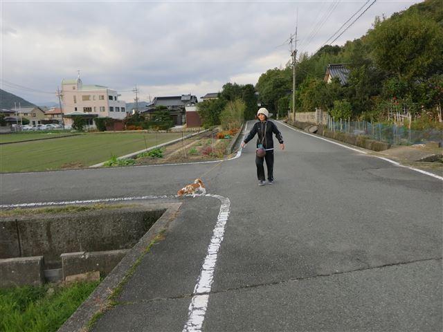 f:id:yasukazu01:20131112211245j:image