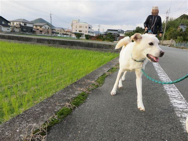f:id:yasukazu01:20131112211330j:image