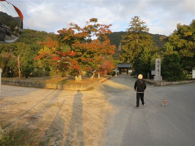 f:id:yasukazu01:20131112211828j:image