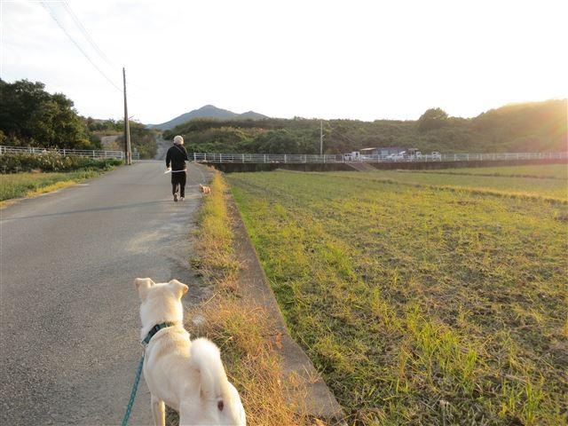 f:id:yasukazu01:20131112211949j:image
