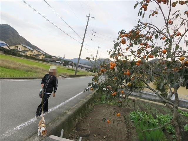 f:id:yasukazu01:20131112212311j:image