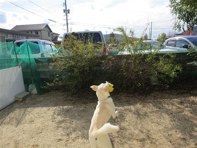 f:id:yasukazu01:20131113192941j:image