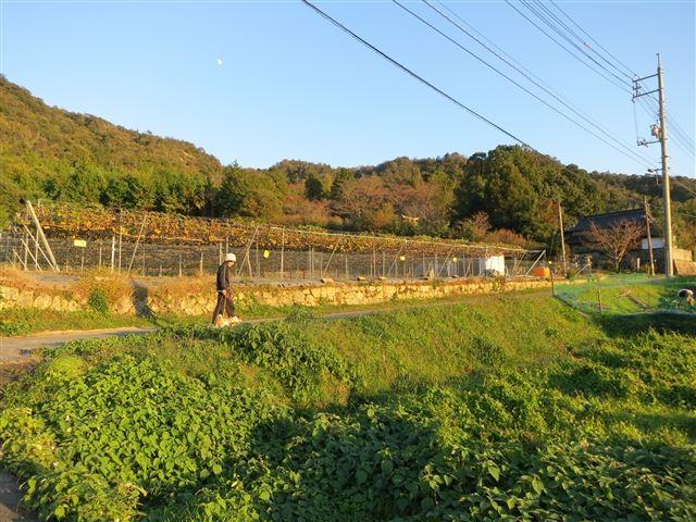 f:id:yasukazu01:20131115195842j:image