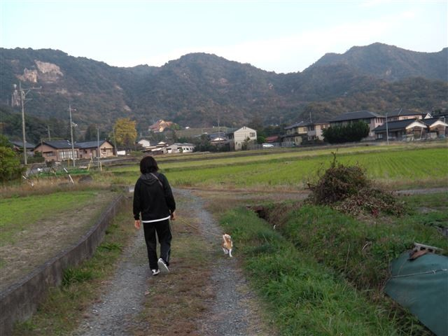 f:id:yasukazu01:20131116202213j:image