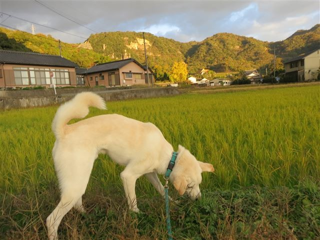 f:id:yasukazu01:20131121214039j:image