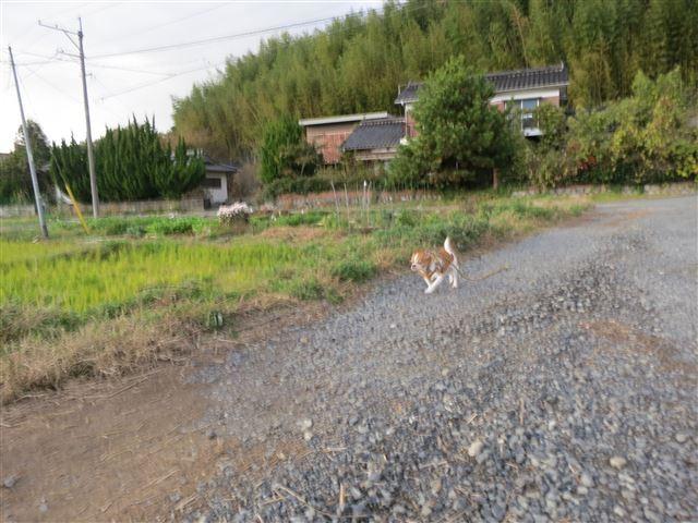 f:id:yasukazu01:20131121214439j:image