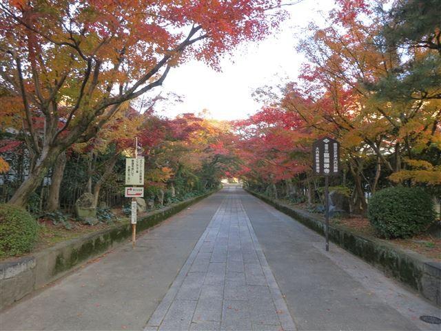 f:id:yasukazu01:20131123201803j:image