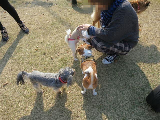 f:id:yasukazu01:20131127195856j:image