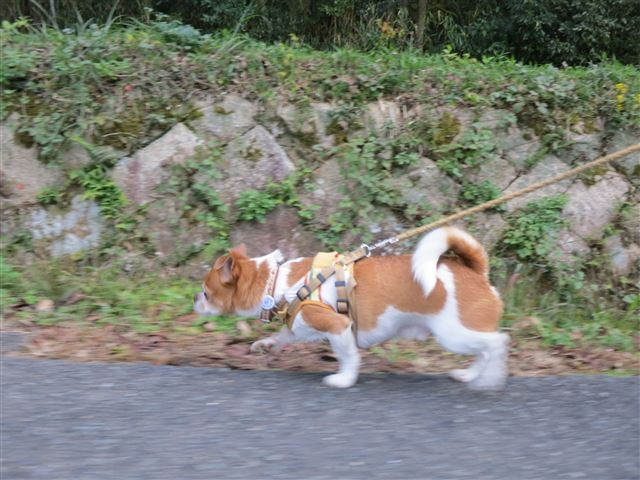 f:id:yasukazu01:20131203222507j:image