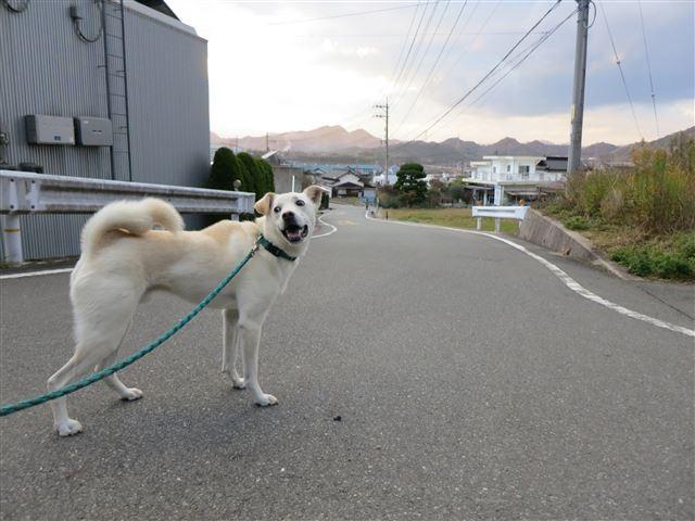 f:id:yasukazu01:20131203222645j:image