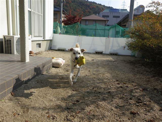 f:id:yasukazu01:20131205223647j:image