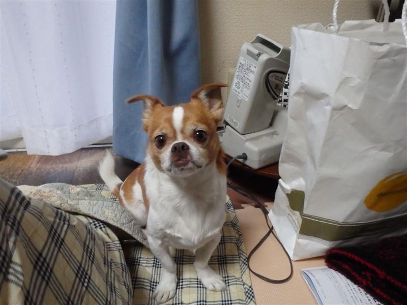 f:id:yasukazu01:20131206212636j:image