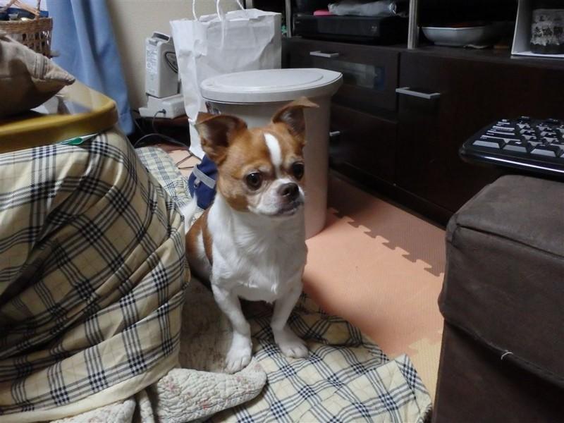 f:id:yasukazu01:20131206213135j:image