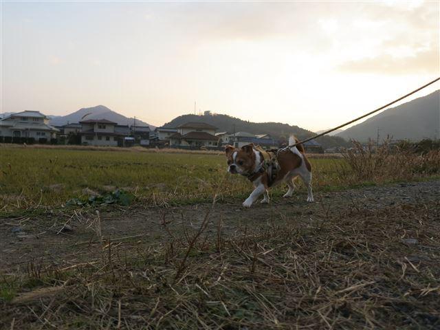 f:id:yasukazu01:20131207223629j:image