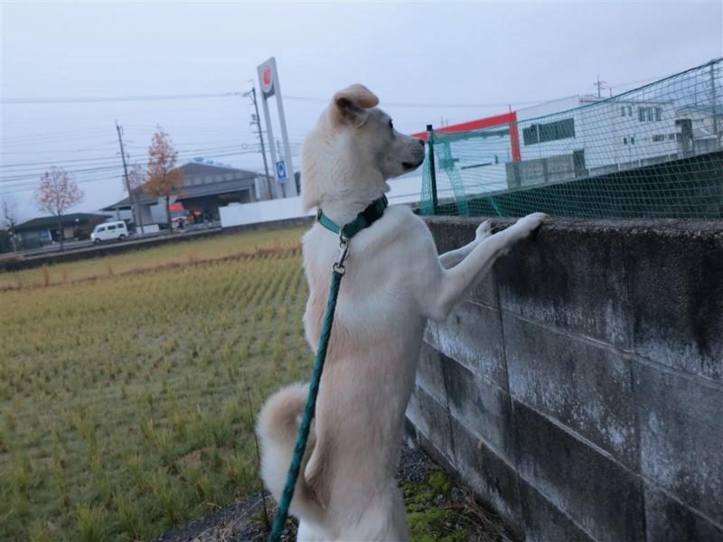 f:id:yasukazu01:20131208231632j:image