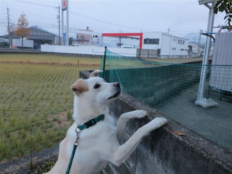 f:id:yasukazu01:20131208231812j:image