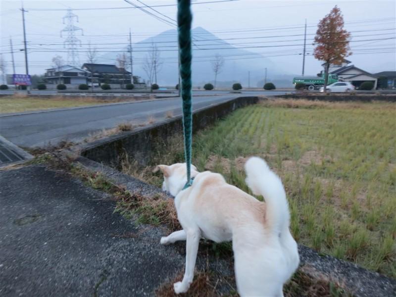 f:id:yasukazu01:20131208232001j:image