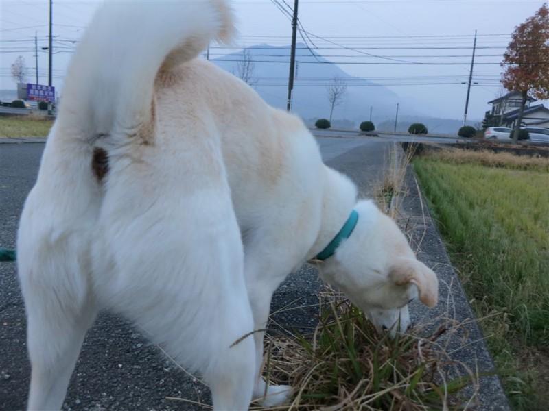 f:id:yasukazu01:20131208232105j:image