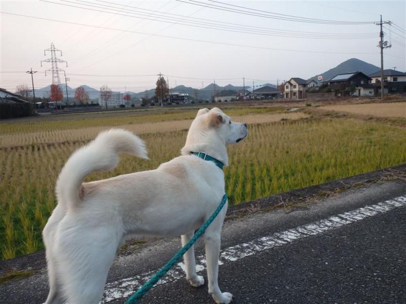 f:id:yasukazu01:20131209224703j:image